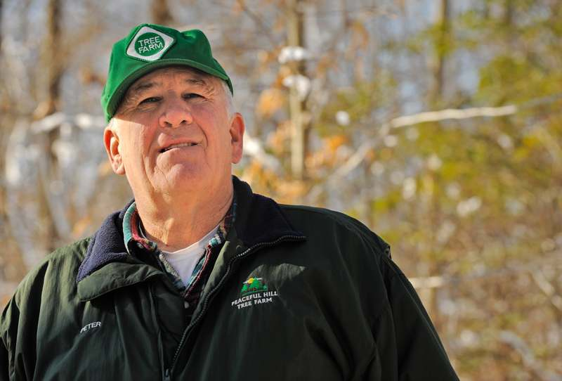 Peter Bergan, the 2009 Connecticut Tree Farmer of the Year, stands amid trees on his 50-acre Peaceful Hill Tree Farm in East Hampton on Tuesday. Bergan and his wife, Arlene, sell cut-your-own Christmas trees that they grow on about six acres of the farm.