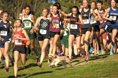 Runners take evasive actions as an excited cocker spaniel cuts straight across the start of the girls varsity race during the ECC Championship meet at the Norwich Golf Course on Oct. 18.