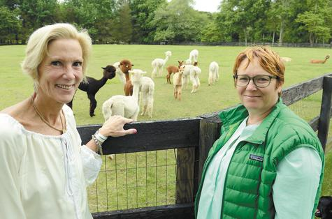 Right: Stillmeadow Farm owner Pam Brewster, left, and farm manager Sylvie Remingol stand at the fence of a pasture as alpaca mothers and their young that were born this spring graze.