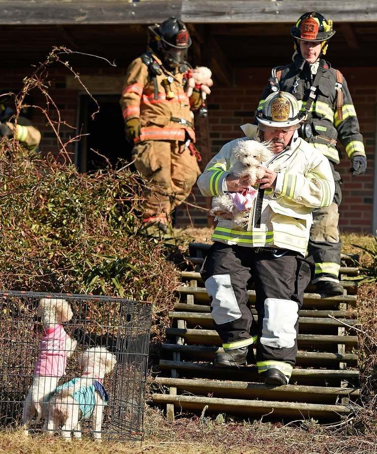 Mystic Fire Department deputy chief Anthony Manfredi carries one of four dogs rescued Friday, Jan. 11, 2019, from the house as firefighters battle a wind-blown fire at 351 Lestertown Road, at the corner of Military Highway, in the City of Groton. (Sean D. Elliot/The Day)