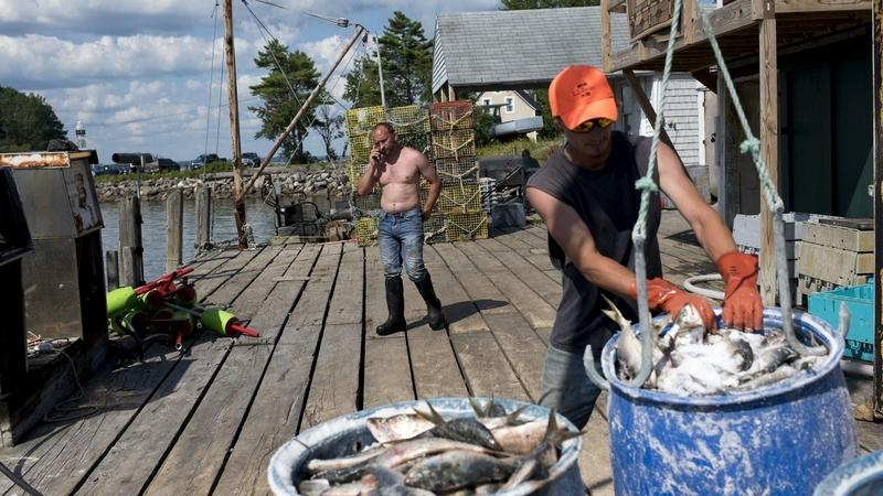 Albert Rose, owner of Allen's Seafood, talks on the phone while fishermen unload their catch last month in Harpswell, Maine. With a median age of 57, Harpswell is the oldest town in the oldest state, by population. (Marlena Sloss/The Washington Post)