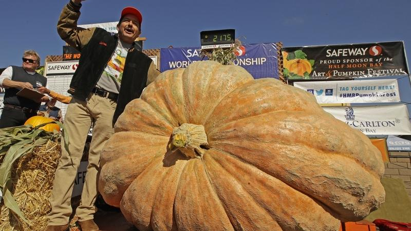 Leonardo Urena of Napa, Calif., reacts after learning his pumpkin weighed in at 2,175 lbs., a new California weight record on Monday, Oct. 14, 2019, in Half Moon Bay, Calif. (AP Photo/Ben Margot)