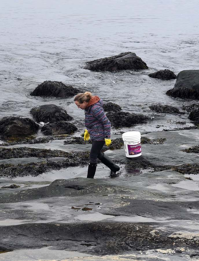 "Fenn Holt, of West Hartford, looks for animals in the tide pools at UConn Avery Point´s campus in Groton on Sunday, Feb. 28, 2021. Fenn is a marine biology teacher at Berlin High School and was gathering crabs, snails and other living organisms to put in aquariums in her classroom.  Her classes usually do field trips with Project Oceanology, which is based at Avery Point, but won´t be able to this year because of COVID-19 restrictions. ""If we can´t come here I´m just trying to bring it to them,"